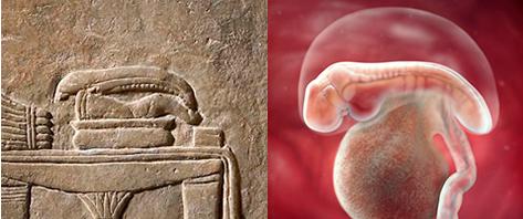 Ученые не могут понять, что за странная штуковина лежит на алтаре - это эмбрион человека!